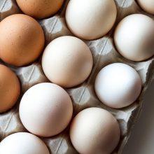 Tavuk ve Yumurta Üretimi